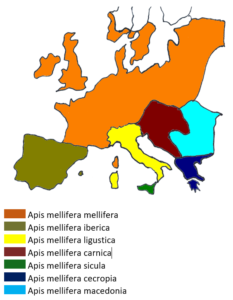 Ursprüngliche Verbreitung der Unterarten in Europa