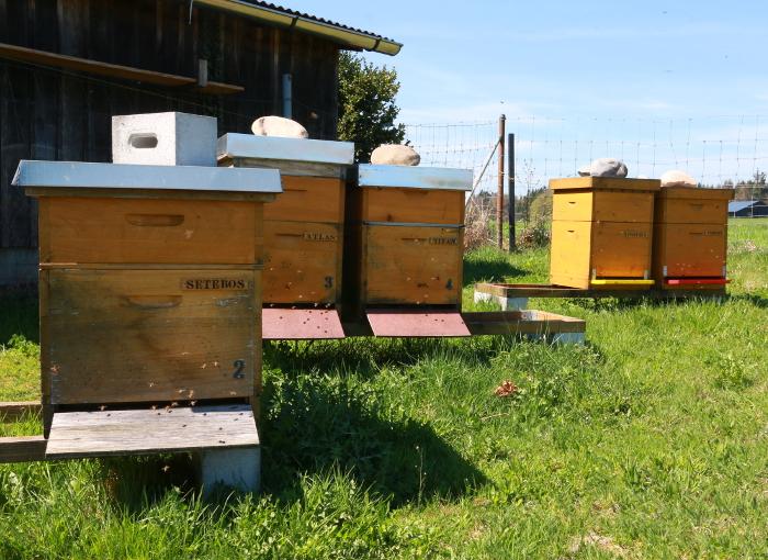 Bienenbeuten mit erster Honigzarge