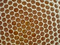 Honigzellen offen