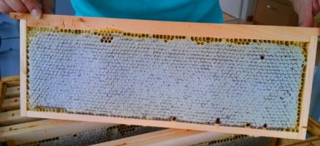 Dadant Honigwabe verdeckelt