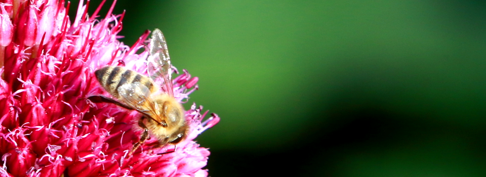 Bienen und mehr