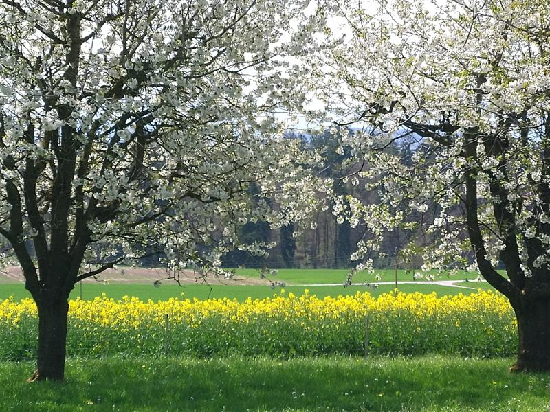 Am 23. April blühen die Obstbäume und Rapsfelder