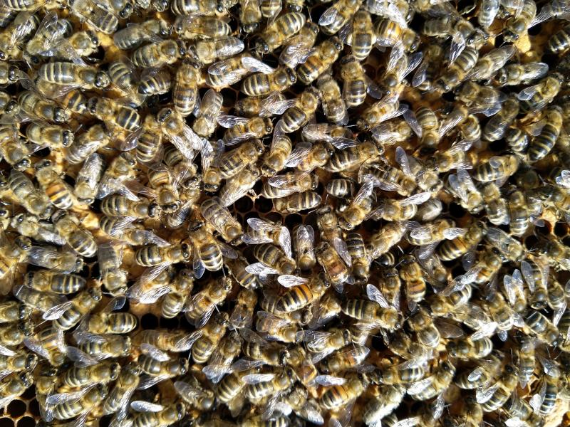 Guter Wärmehaushalt durch Bienenmasse