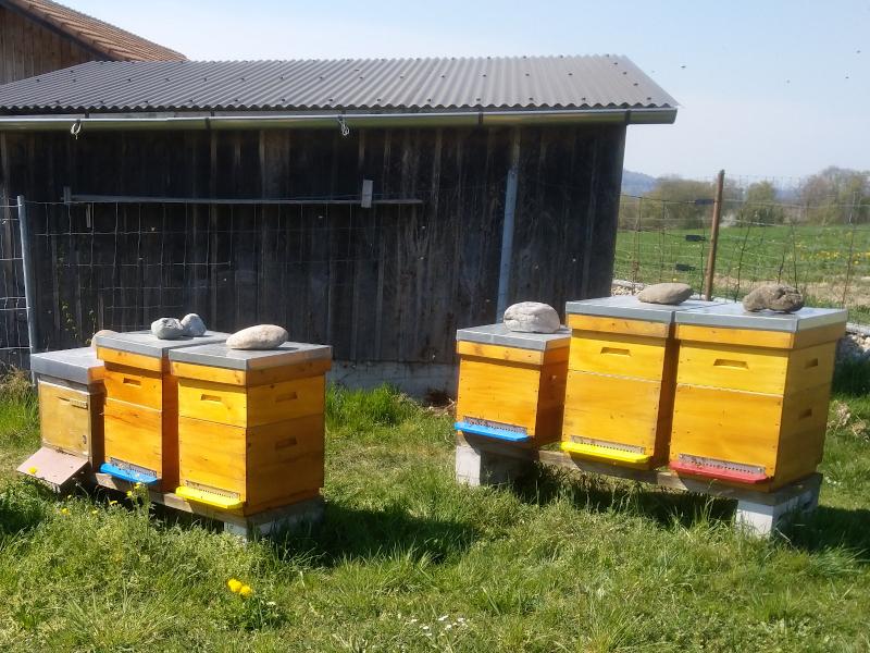Dadant Beuten mit Honigzargen