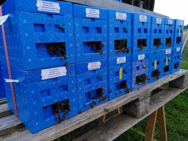 Auf dem Bienenstand